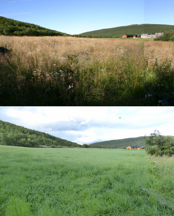 Det øverste bildet fra 2006 er av en villeng i Tana kommune i Troms og Finnmark. I det nederste bildet fra 2017 er villenga omgjort til monokulturell dyrket mark.