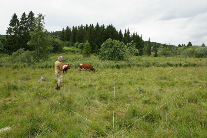 NIBIO overvåker plantemangfoldet i beiter og villeng over tid.