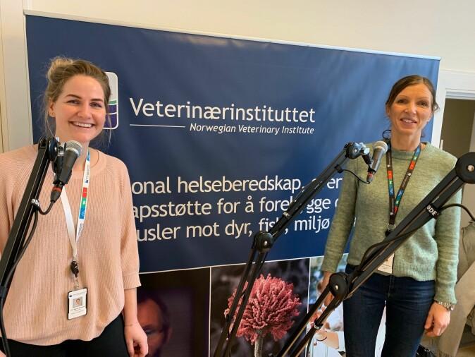 – Prosjektet skal undersøke forekomsten av bakterier som gir lungebetennelse hos kalv fra norske kjøttfe- og melkekubesetninger, sier prosjektleder Thea Blystad Klem, her til høyre. Med henne på bildet er stipendiat Lise Marie Ånestad.