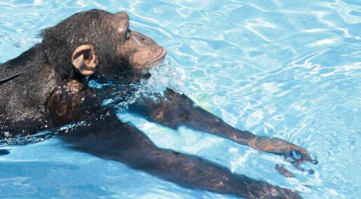 Svømmer som mennesker