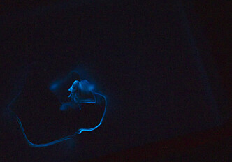Into the dark Arctic winter: Where researchers expected complete darkness, there were luminescent fish