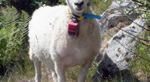 Finner dyrene med radiobjelle