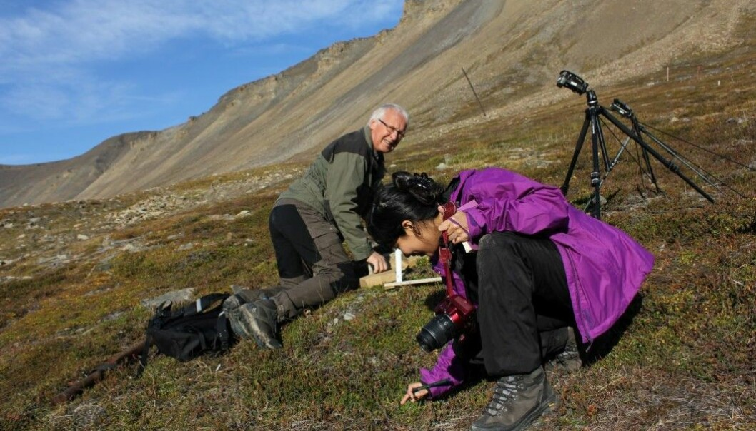 Professor emeritus Arvid Odland and research fellow Gauri Bandekar sample vegetation and soil in arctic zone C, at Adventsdalen on Spitsbergen.