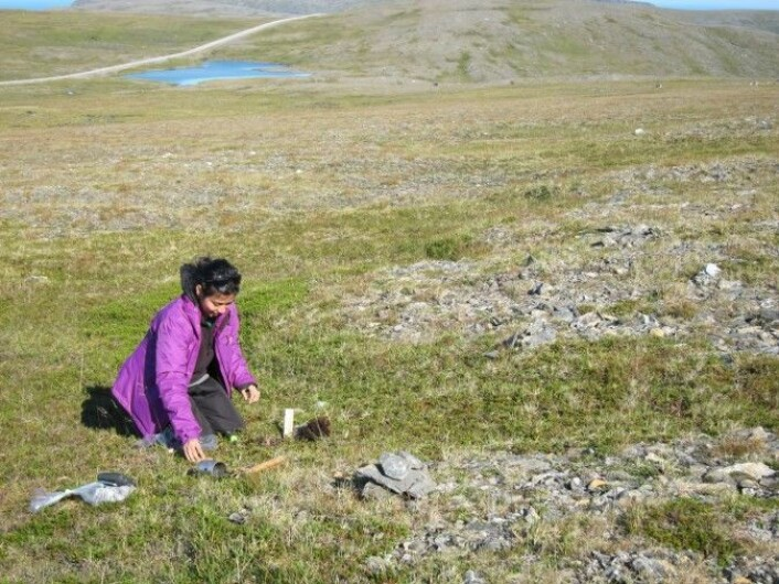 PhD student Gauri Bandekar collecting soil sample from the boreal heathland of the North Cape.
