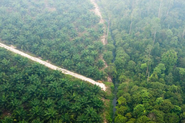 Bildet fra Riau i Sumatra viser både palmeoljeplantasje (monokultur) og variert regnskog. I bildet med et slør av røyk fra skogbrann i 2013.
