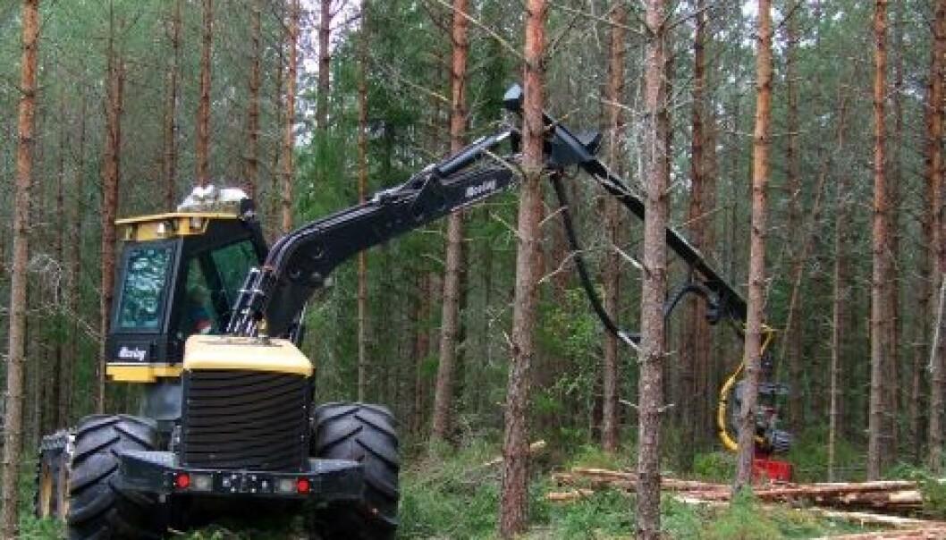 Gunnhild Søgaard/Skog og landskap