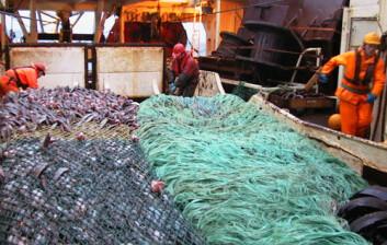 Norsk tråler som fisker blåkveite ved Grønland. Trålposene er kommet på dekk. Det er ikke mulig å ha jevnlige forskningstokt i fjerne farvann, men forskerne har samarbeidet med dem som fisker blåkveite. (Foto: Møreforskning)