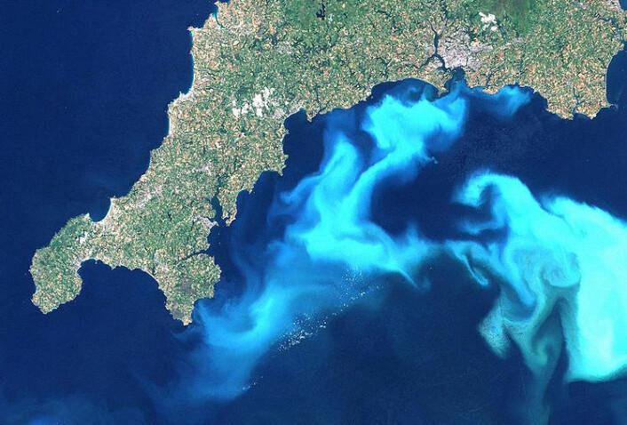 Satellittfoto av en oppblomstring av haptofytten Emiliania huxleyi, utenfor Cornwall. (Foto: Wikimedia Commons/Steve Groom, Landsat)
