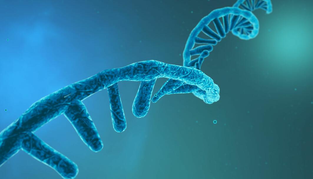 Her ser du en modell av RNA-et - arvestoffet - til koronaviruset. Hver av piggene langs tråden er en slags bokstav,. Til sammen beskriver bokstavene oppskriften på viruset.