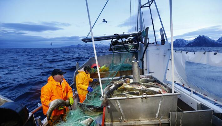 Vi har også tidligere hatt lange perioder med kaldere eller varmere hav. Men i tillegg til de naturlige svingningene får vi nå et sterkere innslag av menneskeskapte klimaendringer. Det vil på sikt få konsekvenser for fiskerne også her på utsiden av Senja.