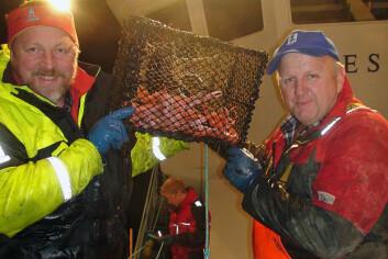 Prosjektleder Kjell Ø. Midling og skipper August Fjeldsgård viser stolt frem krepseteine med 13 store kreps. På dette toktet var gjennomsnittsfangsten hele 750 gram per teine. (Foto: Nofima)