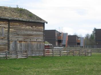 En del av museumsbygning med nyere boliger bak (utenfor museumsområdet), fra Trøndelag folkemuseum på Sverresborg. (Foto: Lone Ross Gobakken / Skog og landskap)