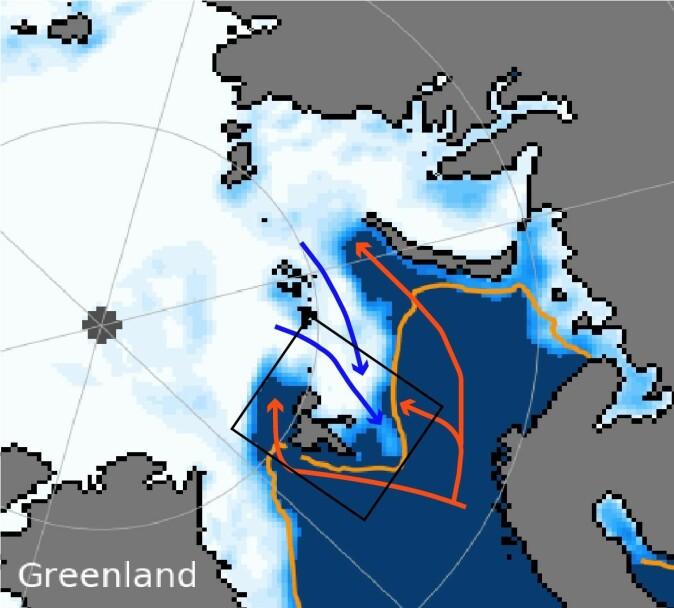 Figur 1: Sjøiskonsentrasjon (hvit) for 5. februar 2021 hentet fra National Snow and Ice Data Center (nsidc.org). Den oransje linjen markere middelposisjonen til sjøiskant for denne datoen (05.02.21) over årene 1981-2010. De røde bilene indikerer hvor det varme atlanterhavsvannet strømmer og de blå piler verser hvor Arktisk vann strømmer inn i Barentshavet. Den svarte boksen viser toktet og AeN prosjektets studieområde.