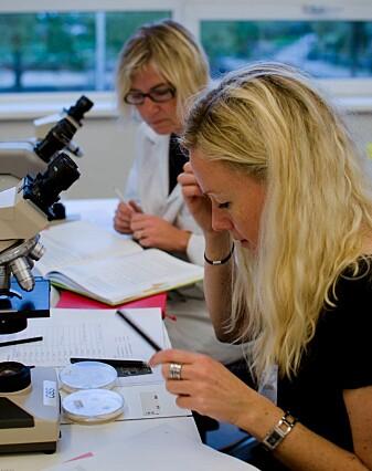Gry Alfredsen (foran) og Lone Ross Gobakken bestemmer sopp i mikroskop.