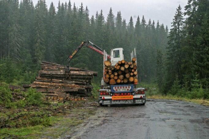 Skogbruket med tenester knytt til skogbruk sysselsette om lag 6 900 personer i 2018.