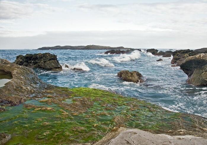 Grønnalger ved kysten. Vi vet ikke helt hvordan grønnalgene så ut for over 600 millioner år siden. Men kanskje kunne de ligge som et lag med grønske på stein.