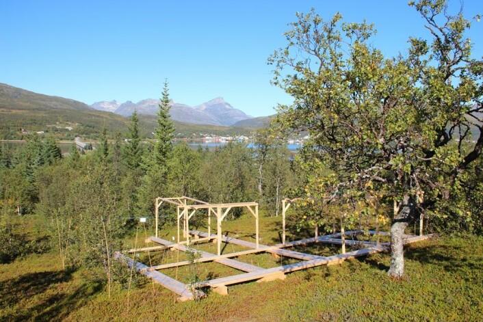 Vegetasjonen i disse rammene på Håkøya vil bli eksponert for både varmeperioder om vinteren og nitrogenforurensning om sommeren. (Foto: Stef Bokhorst)