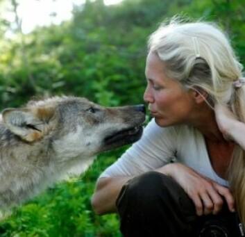 Tess Erngren her med en av ulvene fra Polar Zoo. (Foto: Privat)