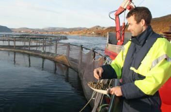 """""""Villfanget torsk er lite interessert i tørrfôr. Men med små porsjoner fôr og sakte tilvenning lærer Frank Kristiansen fisken å spise."""""""