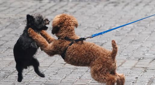 Hunder er mer lekne med eieren til stede
