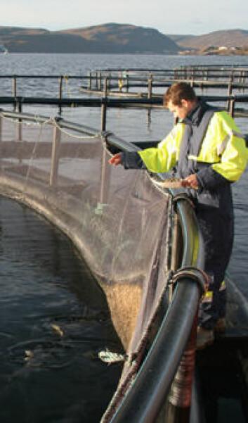 """""""- Det skal være mulig å få all fisken til å spise, sier Kristiansen."""""""