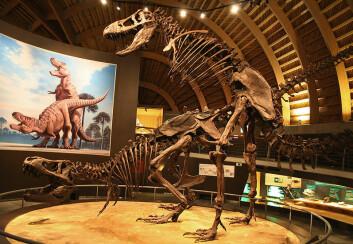 T-rex-utstilling ved Museo Jurásico de Asturias (Foto: Mario Modesto/Wikimedia Creative Commons)