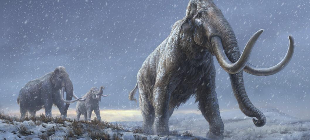 Verdens eldste DNA: Forskere har studert genomet til en million år gamle mammuter