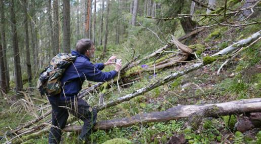 Deler av Østmarka utenfor Oslo kan bli nasjonalpark