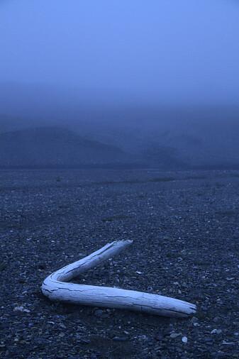 En støttann fra mammut funnet på Vrangeløya i 2017.
