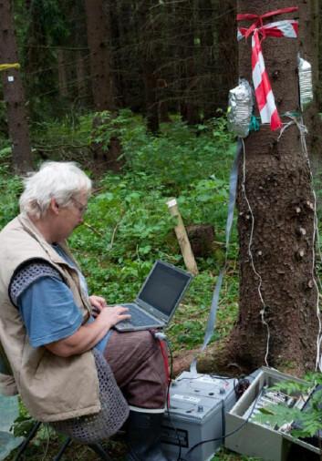 Professor Nadezhda Nadezhdina fra Mendeluniversitetet i Brno henter ned data fra loggeren som registrerer sevjeflyt ved hjelp av temperaturforskjeller. (Foto: Isabella Børja)