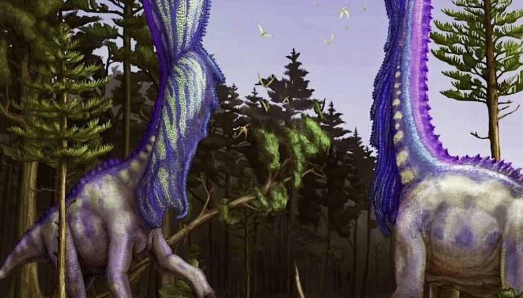 """Dinosaurene hadde sannsynligvis et vell av forskjellige taktikker for å tiltrekke seg damene. Slik ser en illustratør for seg at Sauroposeidon-dinosaurene brukte blåsebelgene vi har funnet rester av for å vise seg frem for partneren. (Bilde: <a href=""""http://dontmesswithdinosaurs.com/?page_id=13"""">Brian Engh</a>)"""
