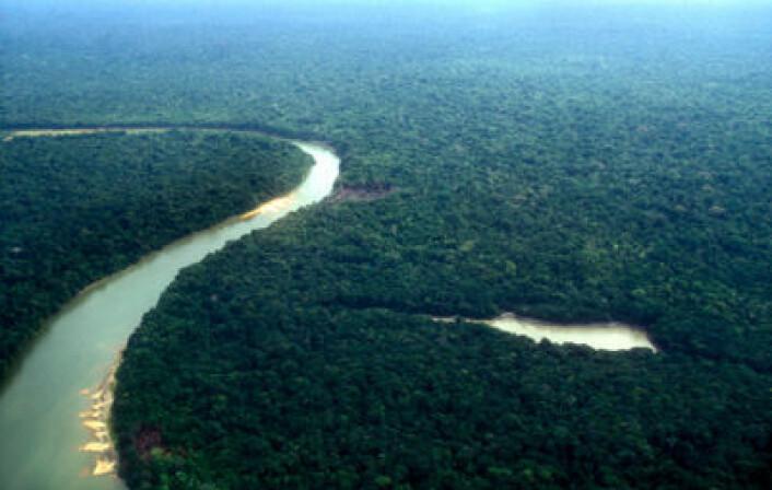 Brasil har oppnåd resultater i forhold til å redusere avskoging i Amazonas som ingen trodde var mulig for ti år siden. (Foto: iStockphoto)