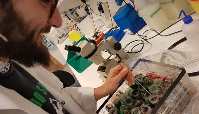 Ph.d.-student Stefano Scilipoti har stått bak laboratorieforsøkene i den nye studien. Her er han i ferd med å klargjøre sedimentprøver som inneholder levende bakterier.