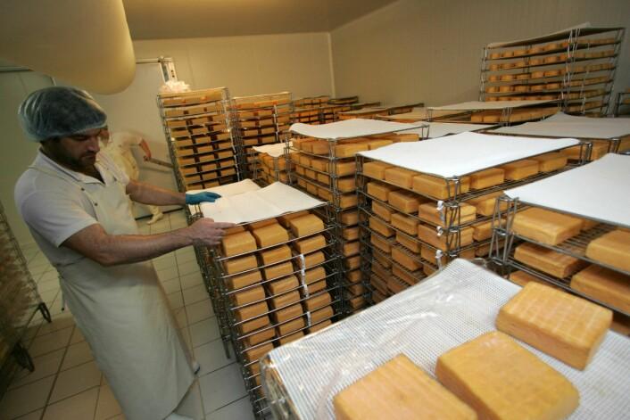 Hvis man tilsetter probiotiske bakterier i den myse-permeaten som blir til overs når man produserer ost, kan man bruke den til å forebygge diaré forårsaket av E. coli-bakterier hos smågriser. (Foto: Colourbox)