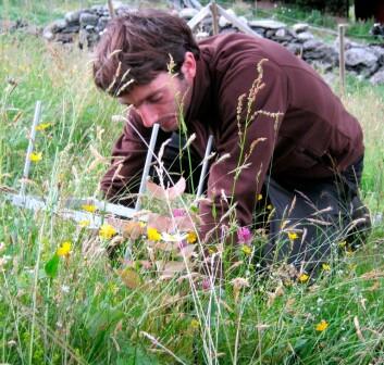 En student ligger på knærne for å måle og telle hva som har skjedd med plantene i økosystemet, tre år etter at de ble flyttet. (Foto: Vigdis Vandvik)
