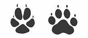 Rødrev til venstre. Hund til høyre.