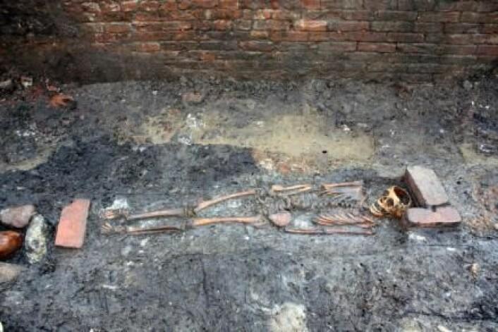Jorden omkring skjelettet fra et barn som ble begravet ved Ribe Domkirke for 800 år siden, inneholder opplysninger om den siste dagen barnet var i live. (Foto: Sydvestjyske Museer, Ribe)