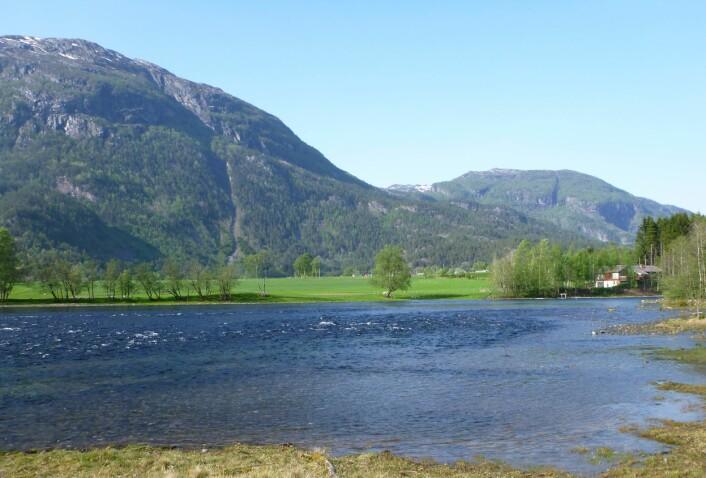 Suldalselva, ei av elvene som var med i undersøkjinga. (Foto: Svein Jakob Saltveit, NHM/UiO)