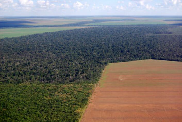 Tempoet i avskogingen i Brasil har gått kraftig ned siden 2005. (Foto: iStockphoto)