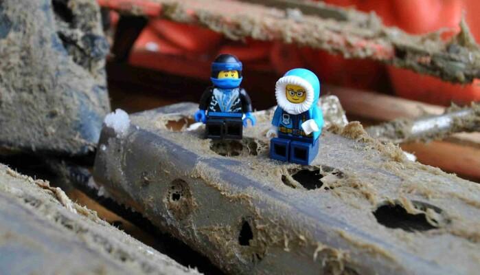 Fra venstre: Den nysgjerrige legoninjaen, og Elin Darelius i legoform, studerer fire års biologi på nært hold.