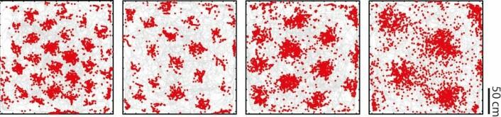 Entorhinal cortex er en del av hjernebarken hvor stedssans utrykkes ved hjelp av hjerneceller som har GPS-liknende egenskaper. Hver celle beskriver miljøet som et heksagonalt rutenett, noe som gav dem navnet gitterceller. Bildene viser en rottes bevegelser (grå linjer) i en 2,2 x 2,2 m boks sett ovenfra. Hvert av de fire panelene viser aktivitetsmønsteret til én grid celle (røde dotter) med én bestemt kartoppløsning, gitt rottens bevegelser. (Foto: (Illustrasjon: Kavliinstituttet))