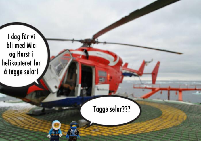 Elin: I dag får vi bli med Mia og Horst i helikopteret for å tagge selar! Ninja: Tagge selar???