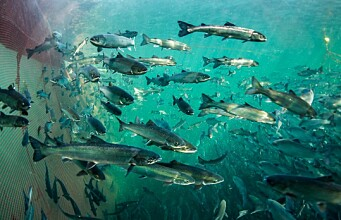 What will farmed fish eat in the future