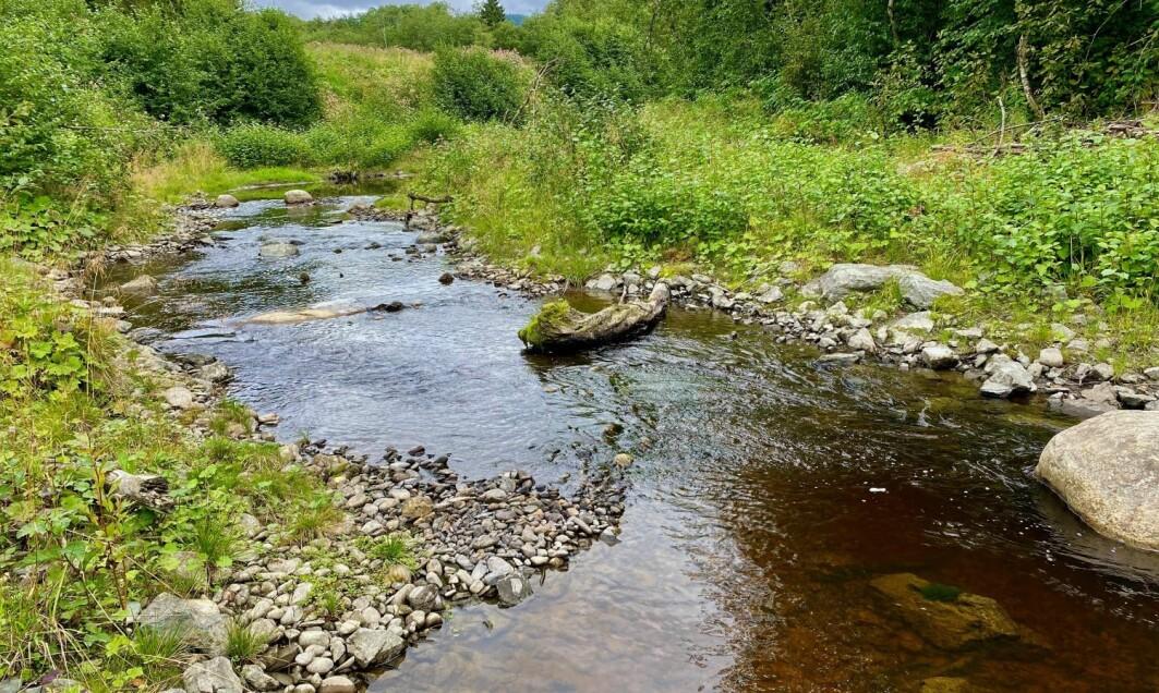 – Mye elveareal i dag er uproduktivt for fisk og biologisk mangfold på grunn av menneskelig aktivitet, sier forsker Espen Holthe.