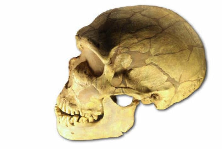 Ferrassie-skallen - fra en neandertaler. Den befinner seg i Musée de l'Homme i Paris og ble oppdaget i 1909 i La Ferrassiei Frankrike. (Foto: Wikimedia Commons)
