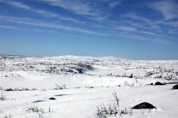 """""""Mengden karbon i jord i nordområdene er omlag like stor som karbonmengden i hele atmosfæren. Dette utgjør mellom 25 og 50 prosent av den totale mengden organisk karbon i jord i verden. Foto: Tore Tollaksen, Bioforsk."""""""