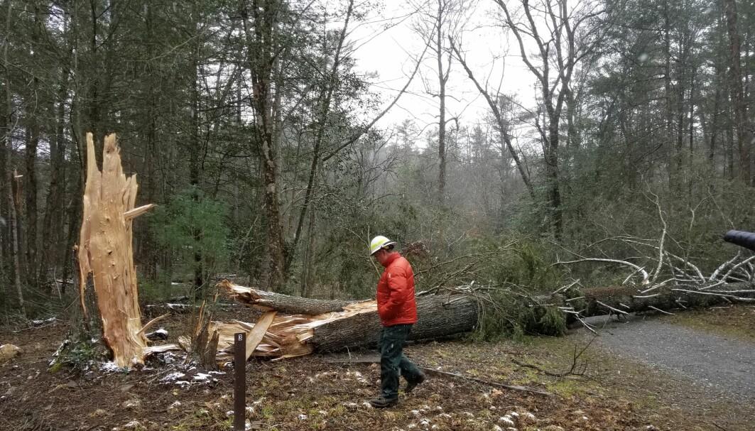 Vind er ansvarlig for tre fjerdedeler av skader på norsk skog. Her fra følgene av en storm i USA i 2018