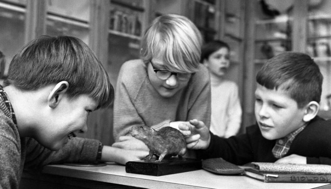 Naturfag på Marienlyst skole i 1966. På dette tidspunktet var sjuårig grunnskole obligatorisk for norske barn. NTB scanpix