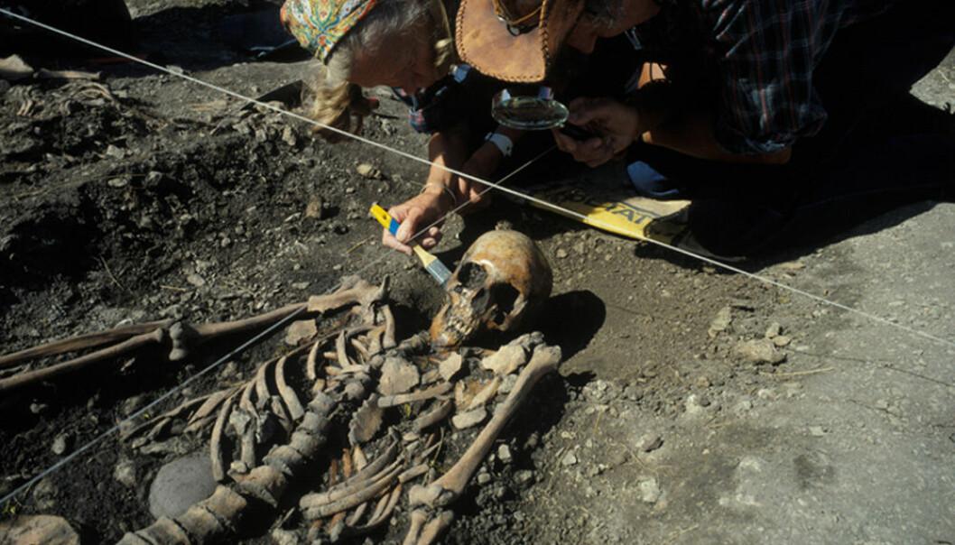 Ove og Evy Persson børster fram det 4 700 år gamle skjelettet av ei kvinne i 20-åra, under utgravinga av ei steinaldergrav ved Ajvide, Gotland, Sverige i 1983. Hun er en av de tre jeger-samlerne som nå er DNA-analysert. (Foto: Göran Burenhult) Göran Burenhult