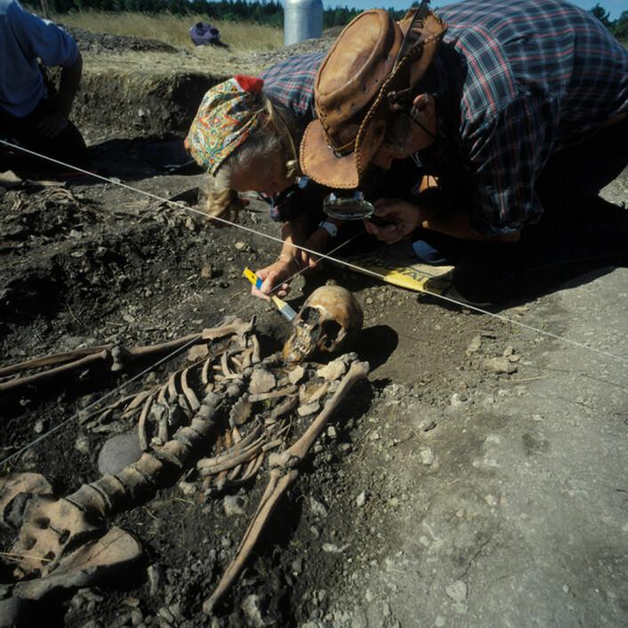 Ove og Evy Persson børster fram det 4 700 år gamle skjelettet av ei kvinne i 20-åra, under utgravinga av ei steinaldergrav ved Ajvide, Gotland, Sverige i 1983. Hun er en av de tre jeger-samlerne som nå er DNA-analysert. (Foto: Göran Burenhult) (Foto: Göran Burenhult)
